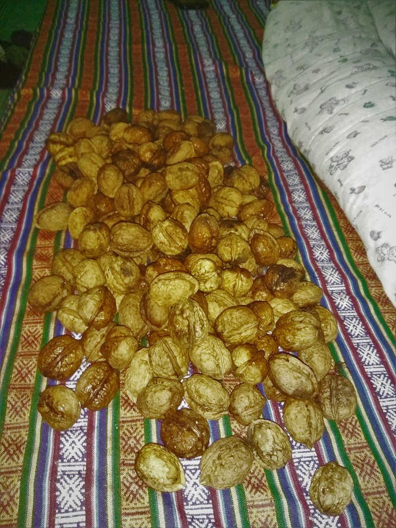 150 walnuts 100 INR Pelling Sikkim