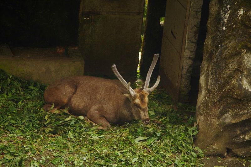 Assam state Zoo cum botanical garden Guwahati