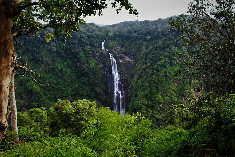 Far view Jog Falls Karnataka