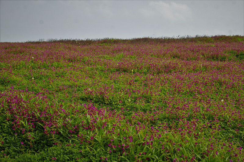 beautiful Kaas Plateau Satara