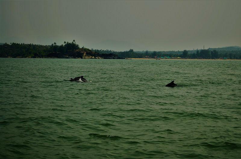 dolphin south Goa