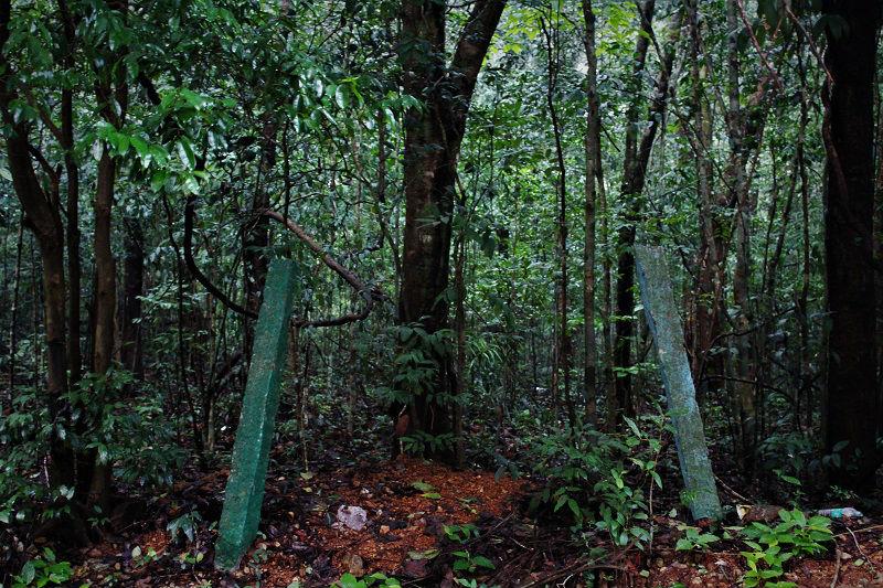 jungles near Dodda Mane Agumbe