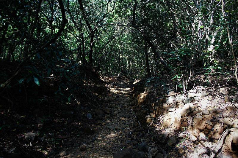 jungles of Andharban