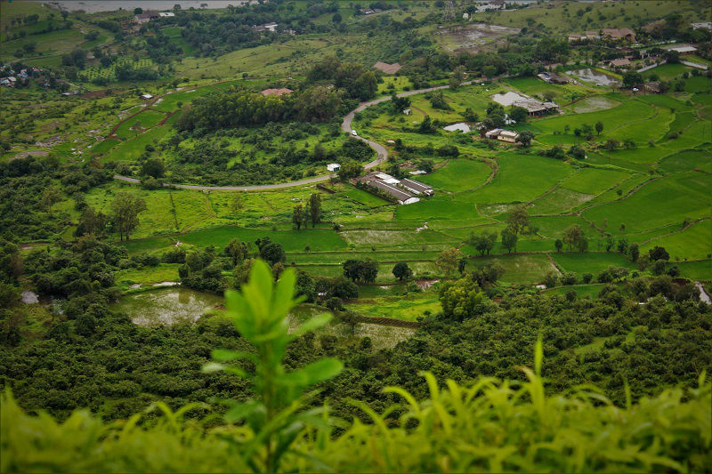 lush green landscapes Tikona Fort