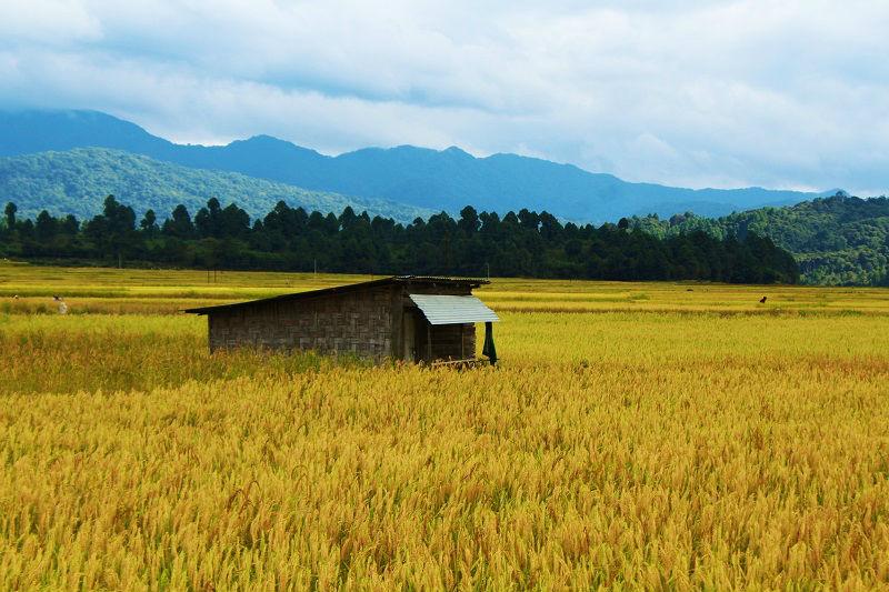 Amazing scenes at Ziro Valley Arunachal Pradesh