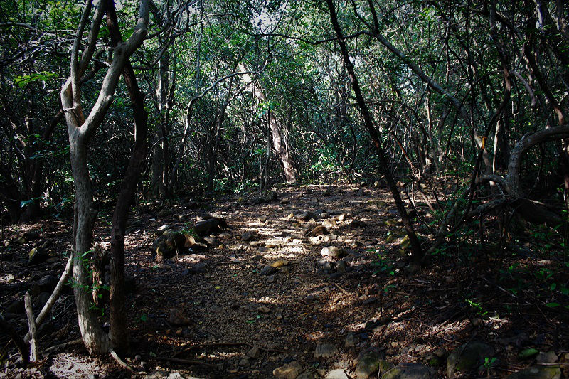 Andharban Jungle trek forest