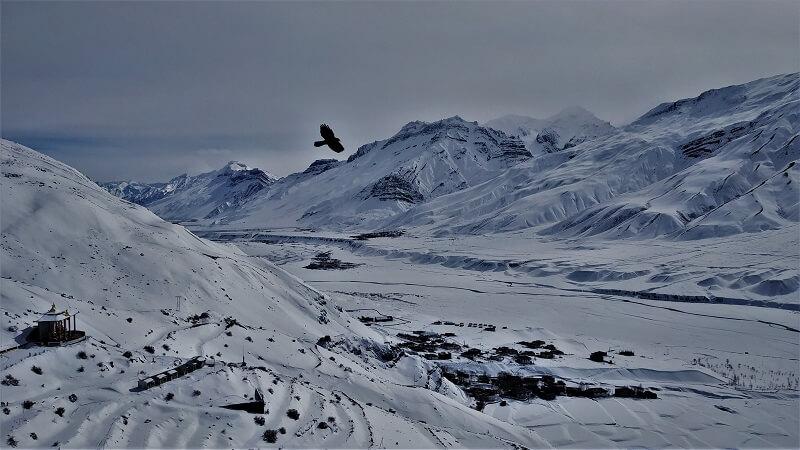 Bird flying near Key Monastery