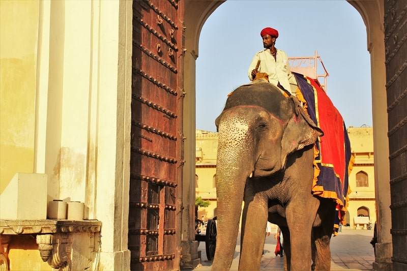 Elephant at Amer Fort must see places in Jaipur