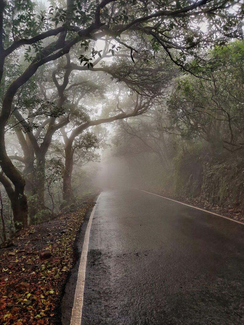 Foggy at Mahabaleshwar
