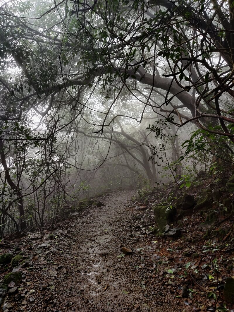 Foggy conditions on Andharban Trek
