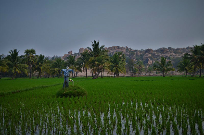 Green fields Hampi Karnataka