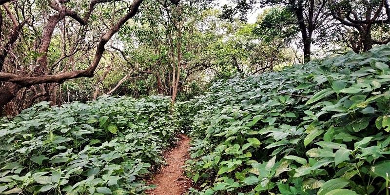 Jungle route as seen on Dhak Bahiri Cave trek