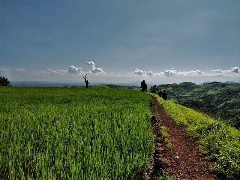 Lush freen farm Sagachiwadi Garbett Point Trek