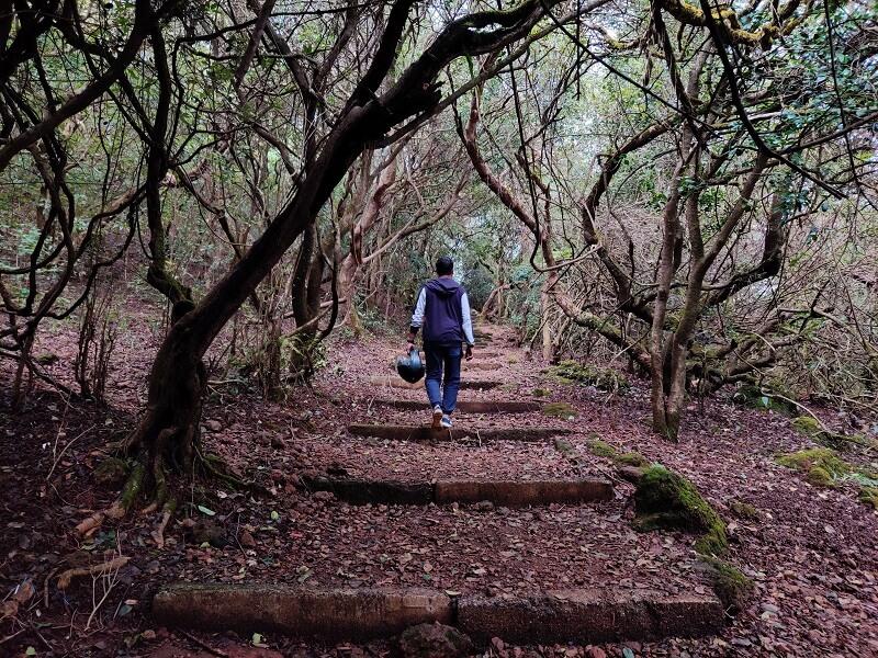 Mahabaleshwar Forests