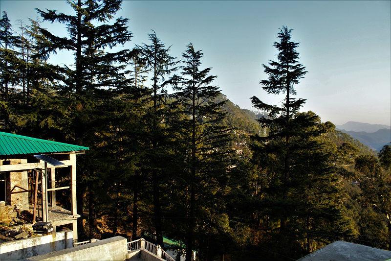 Pine trees Kausani Uttarakhand