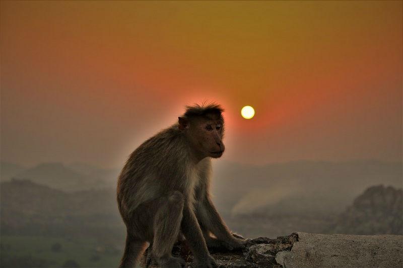 Sunrise with monkey at Hampi Karnataka