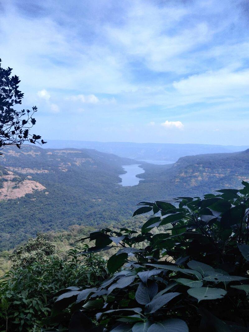 Vasota Jungle