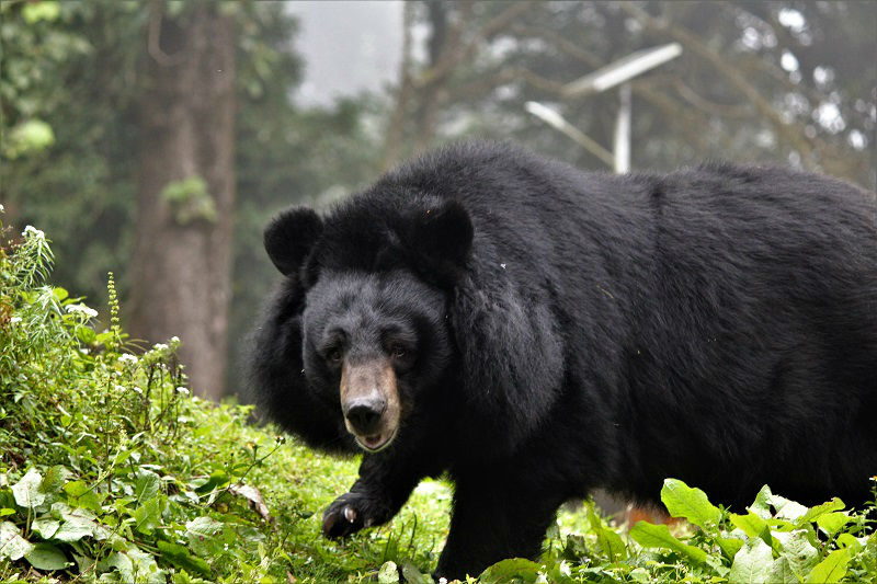 Zoo Darjeeling must see places