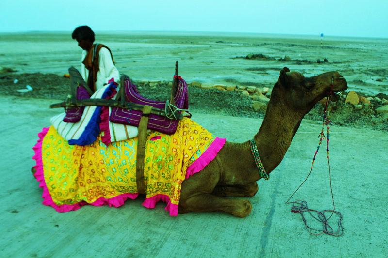 camel ride rann of kutch gujarat