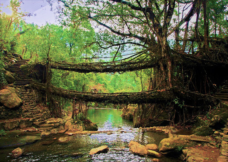 living root bridge at cherrapunji wettest place on earth