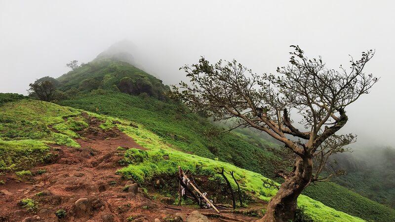 lush green Torna Fort trek