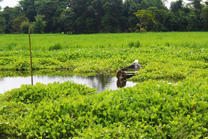 lush green Majuli Assam