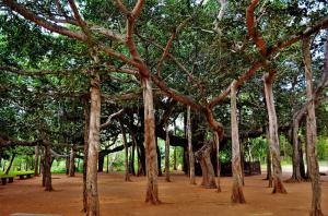 Banyan Tree Auroville Puducherry