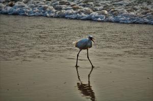 Bird in search of prey at Gokarna Karnataka
