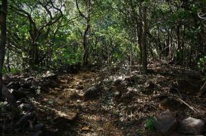 Dense Andharban Jungle
