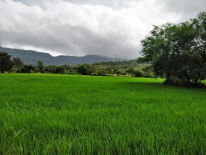 Farms en-route to Tung Fort