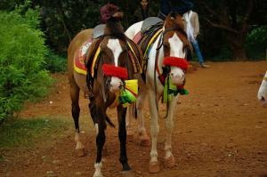 horse at Matheran hill station
