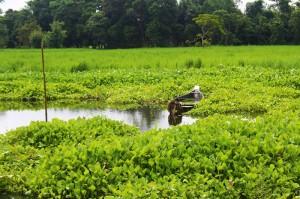lush green majuli river island assam