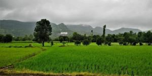 lush green on way to Tamhini Ghat