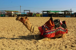 mandvi beach rann of kutch gujarat trip